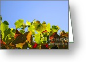 Grapevine  Greeting Cards - Vineyard Leaves Greeting Card by Carlos Caetano