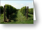 Vineyard Digital Art Greeting Cards - Vineyard on the Peninsula Greeting Card by Michelle Calkins