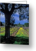 Trees Framed Prints Greeting Cards - Vineyard View Greeting Card by Kathy Yates