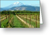 Mountain Vineyards Greeting Cards - Vineyard with a View Greeting Card by Cindy Wright