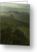 European Union Greeting Cards - Vineyards Along The Chianti Hillside Greeting Card by Todd Gipstein