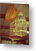 Antique Basket Greeting Cards - Vintage Birdcages Greeting Card by Sonja Quintero