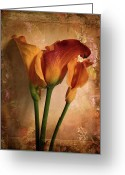 Warm Greeting Cards - Vintage Calla Lily Greeting Card by Jessica Jenney
