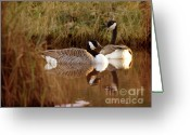 Wild Goose Greeting Cards - Vintage Geese Greeting Card by Angel  Tarantella