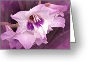 Purple Gladiola Greeting Cards - Vintage Gladiola No. 11 Greeting Card by Richard Cummings