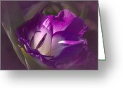 Purple Gladiola Greeting Cards - Vintage Gladiola No. 2 Greeting Card by Richard Cummings
