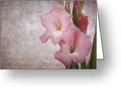 Copyspace Greeting Cards - Vintage gladioli Greeting Card by Jane Rix