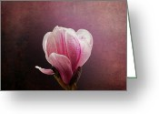 Magnolia Greeting Cards - Vintage Magnolia Greeting Card by Jane Rix
