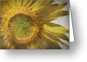Old Paper Greeting Cards - Vintage sunflower Greeting Card by Jane Rix