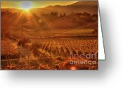Fall Photographs Greeting Cards - Vintners Dusk Greeting Card by Mars Lasar