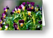 Tiny Flowers Greeting Cards - Viola Parade Greeting Card by Karen Wiles
