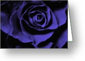 Black Artwork Greeting Cards - Violet Blue Rose I Greeting Card by Artecco Fine Art Photography - Photograph by Nadja Drieling