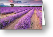 Lavender Greeting Cards - Violet Dreams Greeting Card by Evgeni Dinev