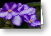 Violet Purple Greeting Cards - Violet Dreams Greeting Card by William Jobes