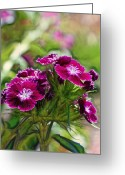 Floral Print Greeting Cards - Violet Floral Imressions Greeting Card by Bill Tiepelman