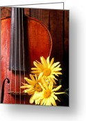 Symphony Greeting Cards - Violin with daises  Greeting Card by Garry Gay