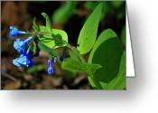 Woodland Plant Greeting Cards - Virginia Bluebells Greeting Card by Teresa Mucha