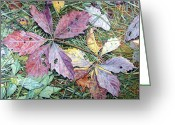 - Harlan Greeting Cards - Virginia Creeper Greeting Card by - Harlan