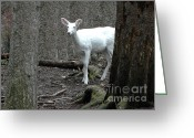 Rudolph Greeting Cards - Vision Quest White Deer Greeting Card by LeeAnn McLaneGoetz McLaneGoetzStudioLLCcom