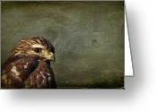 Osprey Photo Greeting Cards - Visions of Solitude Greeting Card by Evelina Kremsdorf