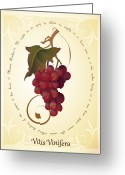 Marcus Greeting Cards - Vitis Vinifera Greeting Card by CarrieAnn Reda