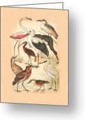 Spoon Bill Mixed Media Greeting Cards - Waders Greeting Card by Eric Kempson