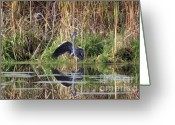 Reflections In Water Greeting Cards - Wading In Heron Greeting Card by Cathy  Beharriell