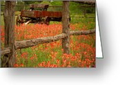 Texas Hill Country Greeting Cards - Wagon in Paintbrush - Texas Wildflowers wagon fence landscape flowers Greeting Card by Jon Holiday