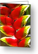 Waimea Greeting Cards - Waimea Flowers IV Greeting Card by Elizabeth Hoskinson