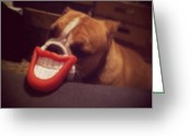 Petstagram Greeting Cards - Wait Til U See My Smile! #tonka Greeting Card by Ariana Hernandez