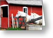 White White Horse Digital Art Greeting Cards - Waiting     Greeting Card by Lyle  Huisken