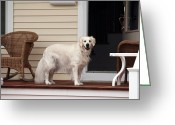 Dog Prints Photo Greeting Cards - Waiting by the Door for You Greeting Card by John Rizzuto