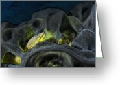 Refuges Greeting Cards - Waiting For A Meal, A Moray Eel Hides Greeting Card by Brian J. Skerry