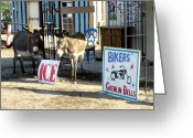 Oatman Greeting Cards - Waiting for ice Greeting Card by Dany Lison Photography