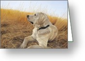 Yellow Dog Greeting Cards - Waiting For The Birds Greeting Card by Tammy  Taylor