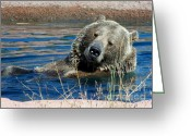 Grizzly Bears Greeting Cards - Waiting on Lunch Greeting Card by Karen Wiles
