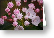 Mountain Laurel Greeting Cards - Waiting to Burst Greeting Card by Randy Bodkins