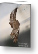 Cocoon Greeting Cards - Waiting to Fly XI Greeting Card by Mandy Shupp