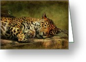 Wild Cat Greeting Cards - Wake Up Sleepyhead Greeting Card by Lois Bryan