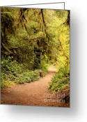 Olympic National Park Greeting Cards - Walk Into the Forest Greeting Card by Carol Groenen