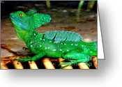 Lizard Greeting Cards - Walk on Water Greeting Card by Karen Wiles