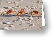Fiddler Crab Greeting Cards - Walk This Way Greeting Card by Christine Stonebridge