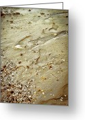 Pebbles Greeting Cards - Walk with Me Greeting Card by Colleen Kammerer