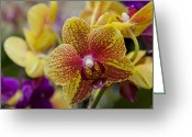 Exotic Orchid Greeting Cards - Walking On Sunshine Greeting Card by Angelina Vick
