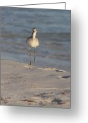 Grayton Beach Greeting Cards - Walking Tall Greeting Card by Charles Warren