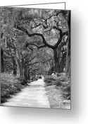 Park Benches Greeting Cards - Walking Through the Park in Black and White Greeting Card by Suzanne Gaff
