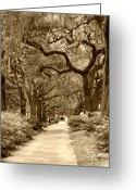 Live Art Greeting Cards - Walking Through the Park in sepia Greeting Card by Suzanne Gaff