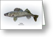 Game Drawings Greeting Cards - Walleye Greeting Card by Ralph Martens
