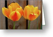 Board Fence Greeting Cards - WallFlowers Greeting Card by Robert Trauth
