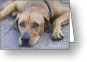 Dog Photographs Greeting Cards - Want to Play  Greeting Card by Chrisann Ellis